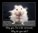 Bit Stressed