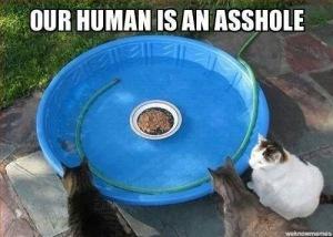 Human Ass